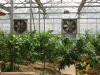 HS Best Quality Greenhouse Cooling Exhaust Fan with Unique Centrifugal System