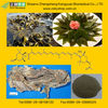 Fucoxanthin /Kelp Extract from GMP Manufacturer