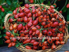 top quality Rose hip P.E.