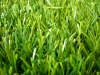 double color artificial turf
