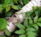 Supply Birch Bark Extract Powder With Betulin 70%-98%