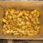 2011 china cheap fresh ginger