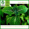 yohimbine hcl 98% pure Bark Extract, Aphrodisiac, great for tinctures