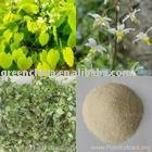 Horny Goat Weed,Epimedium,Sex Drive,Yin Yang Huo,Sex tea,Herbal Tea,100% Natural
