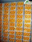 supply sweet Mandarin Orange