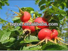 Rosehip oil,Rose hip seed Oil,Rose hip Oil,Base oil,Carrier oil,Essential oil,CAS 84603-93-0