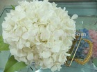 preserved hydrangea 6 colors
