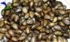 black watermelon seeds