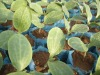 seed Nutritional bag