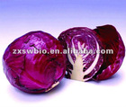 Food additive natural red cabbage extract color