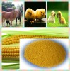 Native high quality of yellow powder corn gluten meal