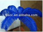 Beatiful Royalblue Color Dyed Ostrich Feathers for Sale