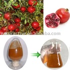 Pomegranate Extract for Beverage and Nutritional Supplements