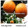 Fresh Chinese Mandarin Orange