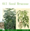 Oil Seed Bruceae
