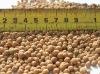 artificial soil balls