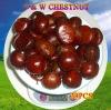 Chinese Fresh Chestnut