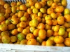 50-80mm fresh mandarin orange from china