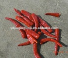 IQF frozen red chilli