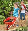 CHILDREN WHEEL BARROW