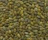 Pumpkin seed kernels(GWS)