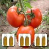2-Isobutyl thiazole tomato flavor food additives