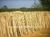 NATURAL dry wooden stick WHOLESALE PRICE