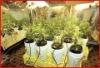 Eco-friendly Reflective Grow Tent