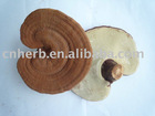 dried Ganoderma lucidum