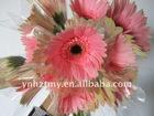 Fresh Cut Flowers--Gerbera--Loveliness