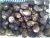 chinese fresh taro for sale