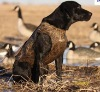 neoprene dog coat