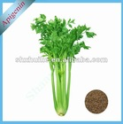 100% Natural Celery seed Extract Powder