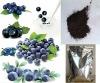 Top Quality Improve-eyesight Product 25% Anthocyanidins Violet Powder Whortleberry