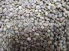 green coffee beans grade AA screen 18