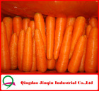 "JQ ""Carrot Price"" Carrot Seeds from China ( new harvest in May)"