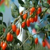 Water-solubility Goji Extract 50%