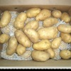 fresh chinese yellow potato