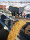 good quality corn maize for sale