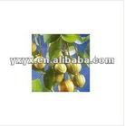 Garcinia Cambogia Extract cas No.:90045-23-1