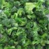 fresh IQF broccoli