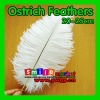 Factory Wholesale 100% Exporting 20-25cm with Various Colors Ostrich Feather for Party Wedding Centerpiece Decoration