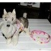 very lovely printing dog harness for your special puppy