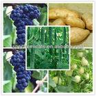 Cyazofamid is a sulfonamides imidazole fungicide applied to potato,grape,cuke,melon,watermelon and so on