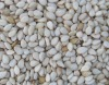 Chinese whitish sesame seeds,grade one