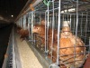 high quality galvanized chicken cage