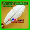 Factory Wholesale 100% Exporting 25-30cm with Various Colors Ostrich Feather for Party Wedding Centerpiece Decoration