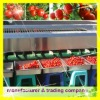 tomato washing and drying machine
