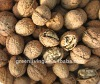 walnuts in shell or kernel cheap price from china