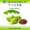 GMP Standard Natural Plant extract Grape Seed Extract OPC 95% powder